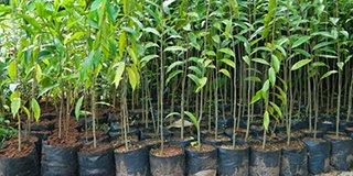 Nghiên cứu cây tạo trầm hương (END)