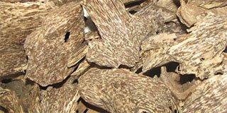 Trầm hương và cách tạo trầm trên cây dó bầu (Phần Cuối)